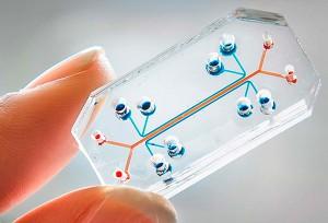 Órgano diseñado artificialmente sobre un chip: en concreto, es un pulmón.
