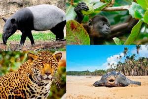 Algunos de los animales que habitan el territorio de Calovébora, Panamá. (Foto: Panamá Conservation Society)