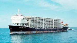 Otro ejemplo de barco ganadero.