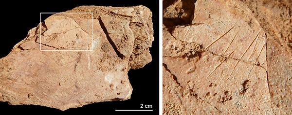 Hueso plano con marcas de corte del nivel III de la Cova de les Teixoneres.