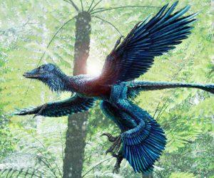 Foto portada: Recreación de un dinosaurio marcadamente evolucionado ya en dirección a las aves actuales.